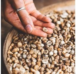 India Arabica Kaffee...